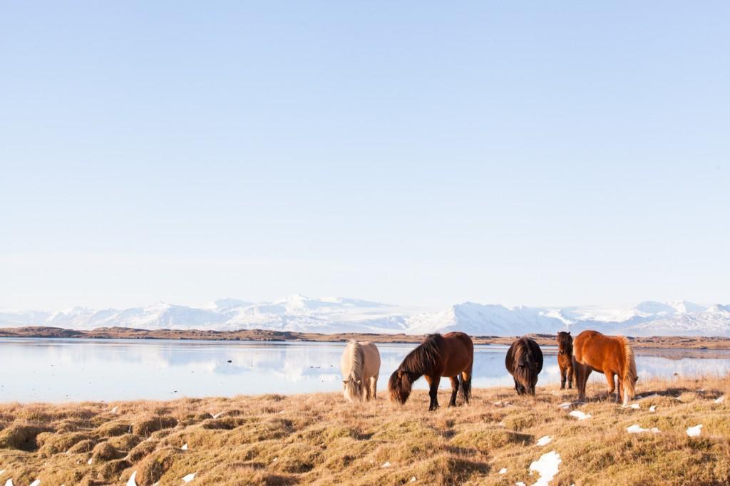Iceland_19 (11 von 18)