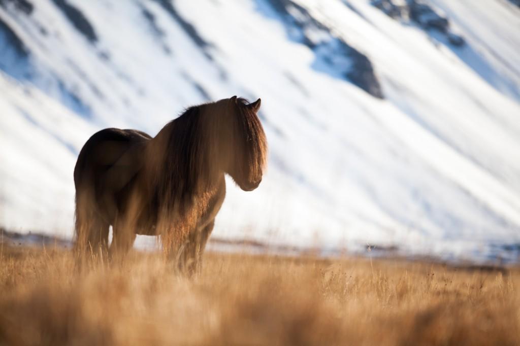 Iceland_19 (16 von 17)