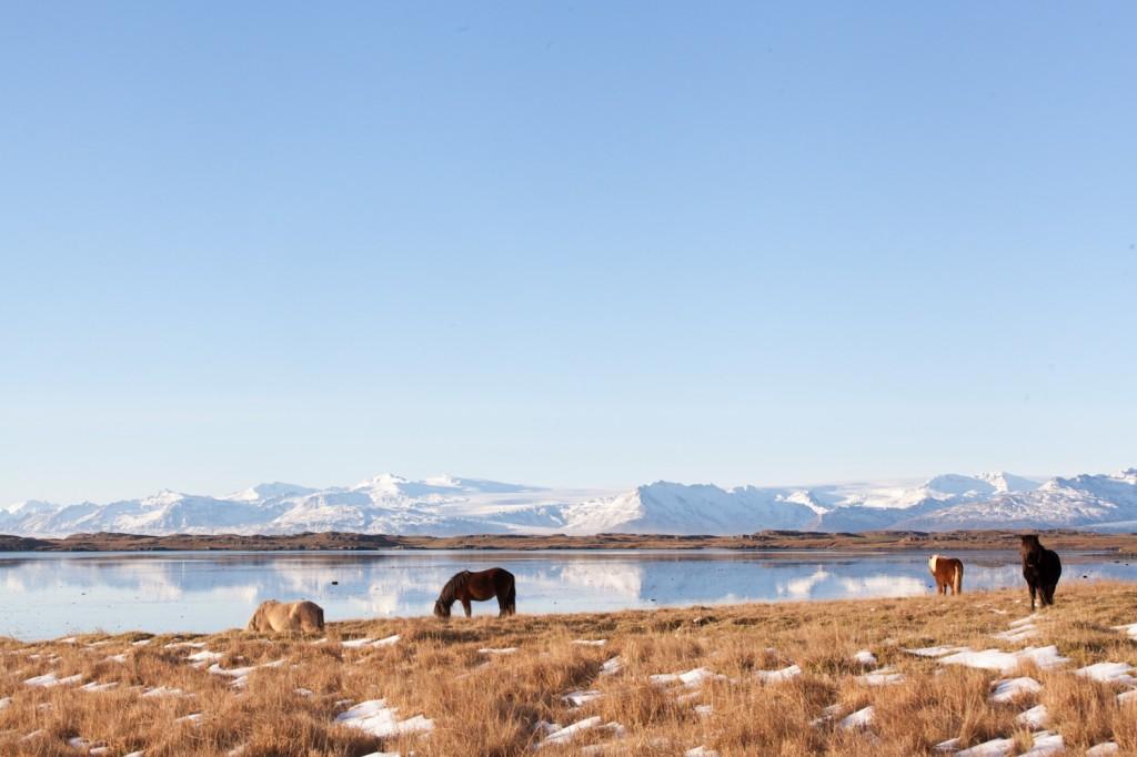 Iceland_19 (18 von 18)