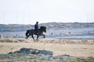 Þór-Steinn